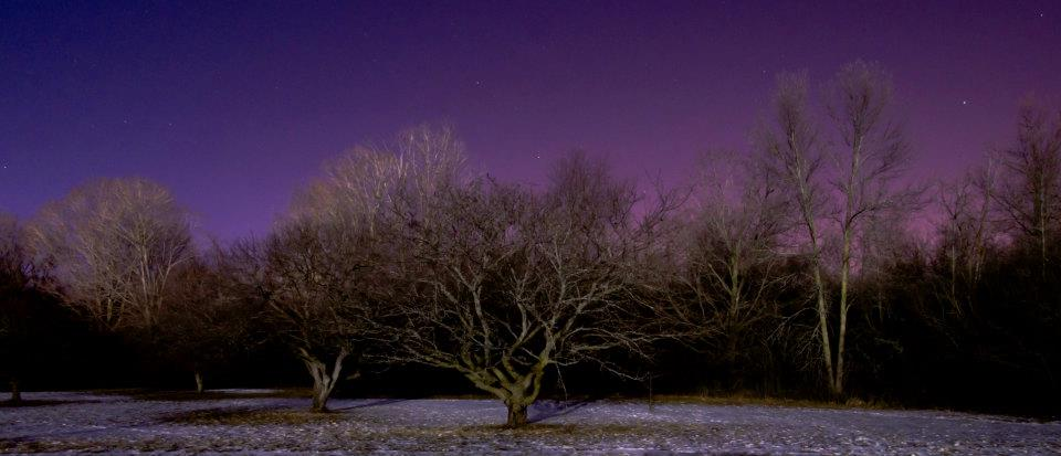 My Town: Trees at Night