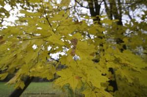 Fall Colors - Seven Bridges Trail at Grant Park - 2013