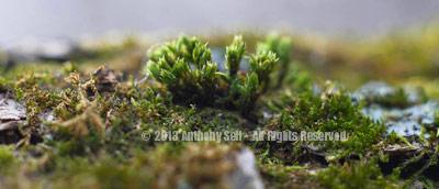 Stock Photo: Moss Landscape